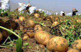 هیأتیها با خرید ۳۳ تن سیبزمینی به کمک کشاورز اهل سنت بیجاری آمدند