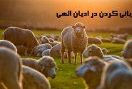 قربانی در ادیان الهی از یهودیت تا اسلام