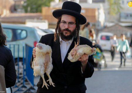 کفاره گناهان با ذبح مرغ در مراسم یهودیان